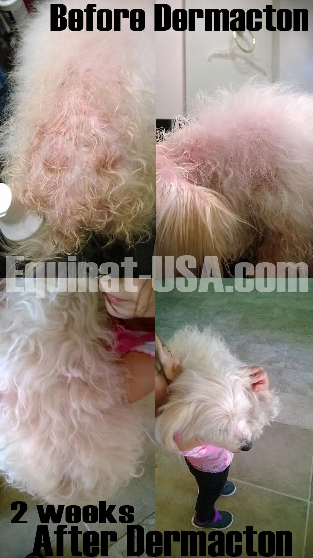 My 6 year old maltipoo Mimi was suffering from skin rash
