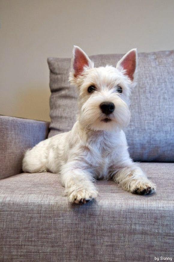 Best Miniature Dogs For Elderly