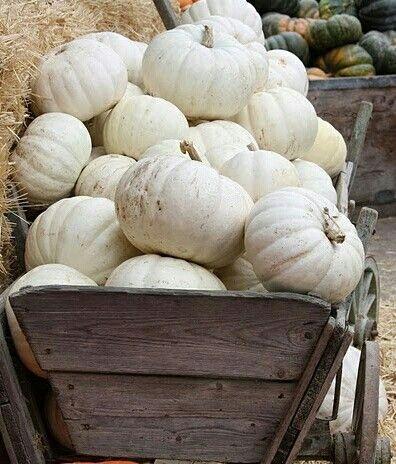 Pumpkins ᶫᵒᵛᵉ