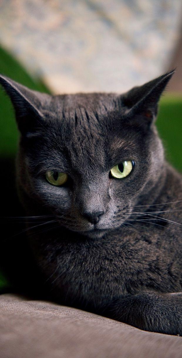 Cute Cat Wallpaper Iphone Collection Women S Cat T Shirts I Like Cats Very Much Cute Cat Wallpaper Cat Wallpaper Cats