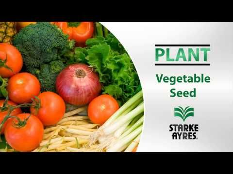 Starke Ayres Vegetable Seed - YouTube