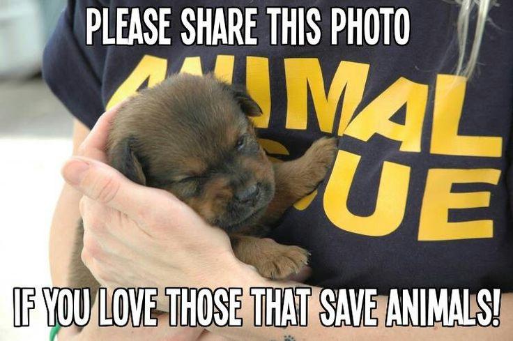 Love it Animal rescue, Animals, Animal shelter