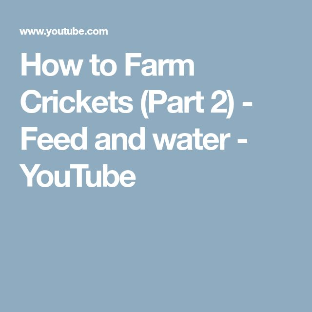 How to Farm Crickets (Part 2) - Feed and water - YouTube