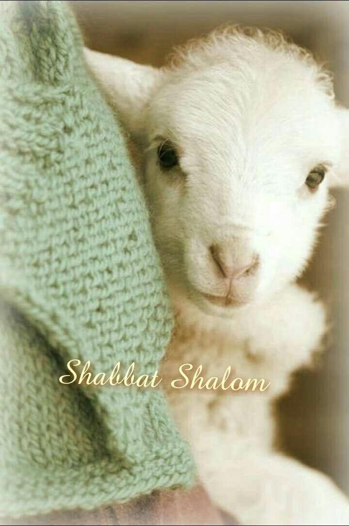 Sabbath Shalom