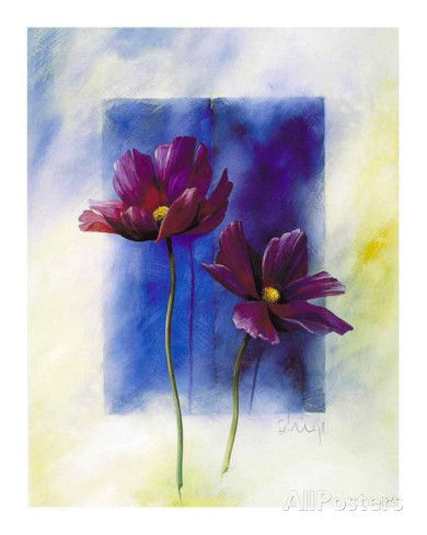Anemones Poster by Franz Heigl - AllPosters.co.uk