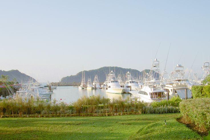 Pesca al Blu  Marlin, direttamente da Potrero