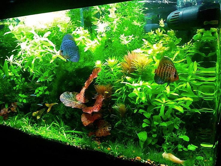 1000 ideas about co2 aquarium on pinterest aquascaping for 38 gallon fish tank