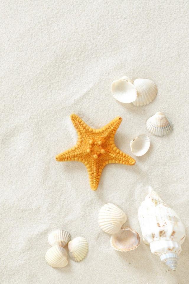 seashells iphone wallpaper | 40+ Cool iPhone Wallpapers ...