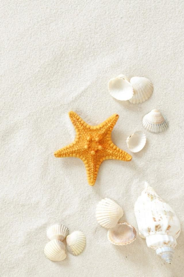 seashells iphone wallpaper | 40+ Cool iPhone Wallpapers Backgrounds | iPhone 5 Pictures, Wallpapers ...