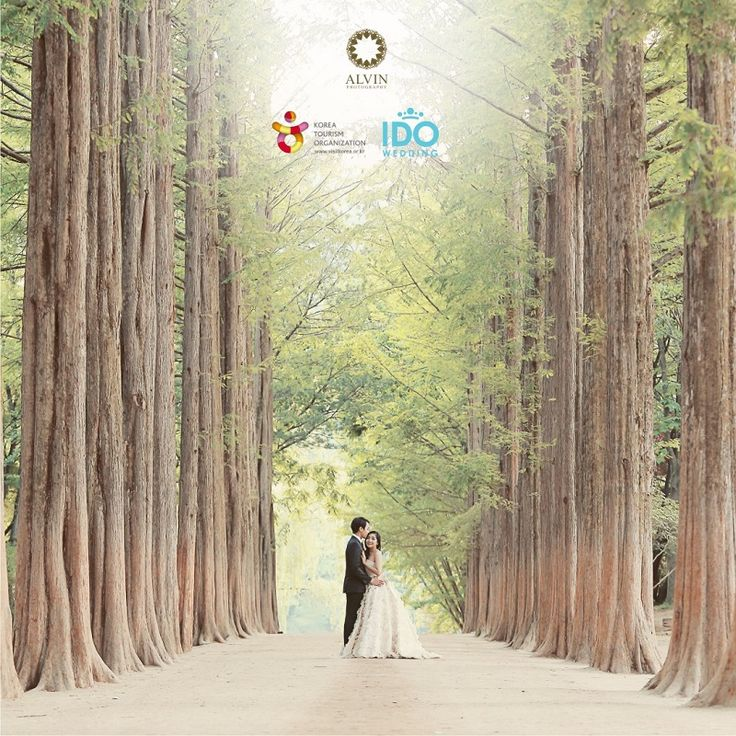 Special Gift From Korea - Alvin Photography & IDO Wedding Details visit instagram @alvinphotography