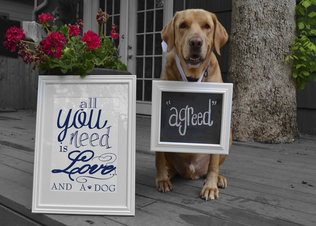 All you need is love and a dog!: Animal Happy, Www Drakescorn Com Austin, Dogs Dogs Dogs, Favorite Animal, Dogs Agr, Drake Corner Estes, Dogs Food, 2007 Www Drakescorn Com, Dogs Love