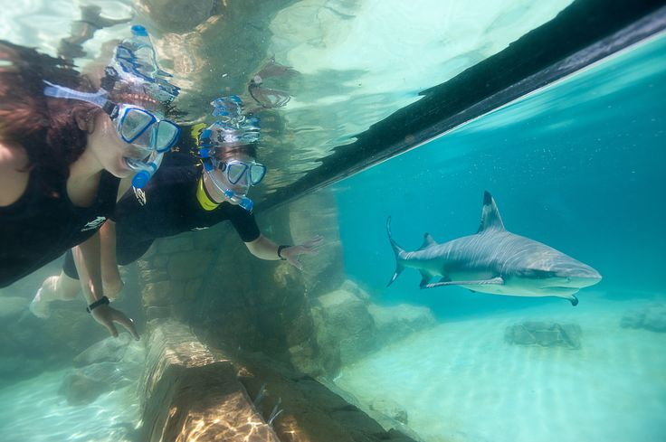 Sharks at Discovery Cove