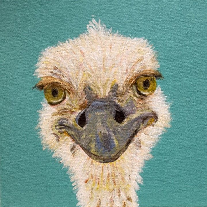 17 Best Images About Ostrich On Pinterest Bird Prints