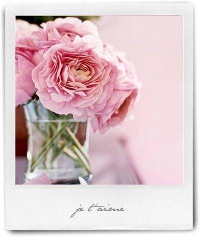 short stemmed fluffy pink roses in glass vases by adunaphel13