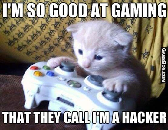 Pussy Gamer - #cats, #pets, #animals, #funny, #lol, #humor, #jokes, #lolpics, #funnypics,