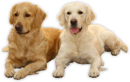 Výsledok vyhľadávania obrázkov pre dopyt psi png gifs