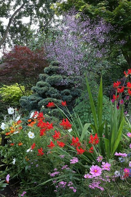 Best 25 tall purple flowers ideas on pinterest purple for Purple flower shrub california