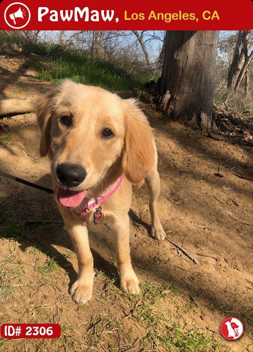 Species: Dog Color: GOLDEN Gender: Female Breed: Golden