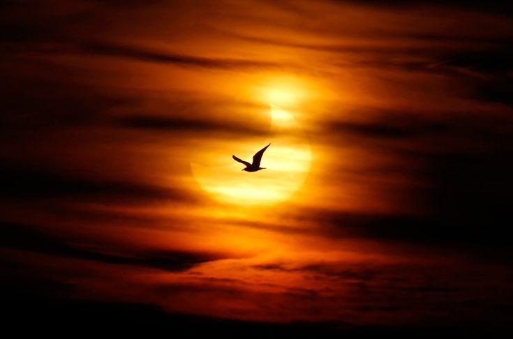 ;: Inspiration Rumi 1, Eclip Photo, Beautiful Eclip, Art Photography, Beautiful Photographers, Photography Community, Photography Natural, Solar Eclipse, Sunrises Sunsets