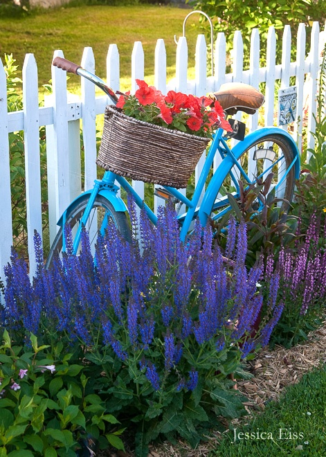 my garden antique aqua bike planted amid purple and pink salvias and orange petunias