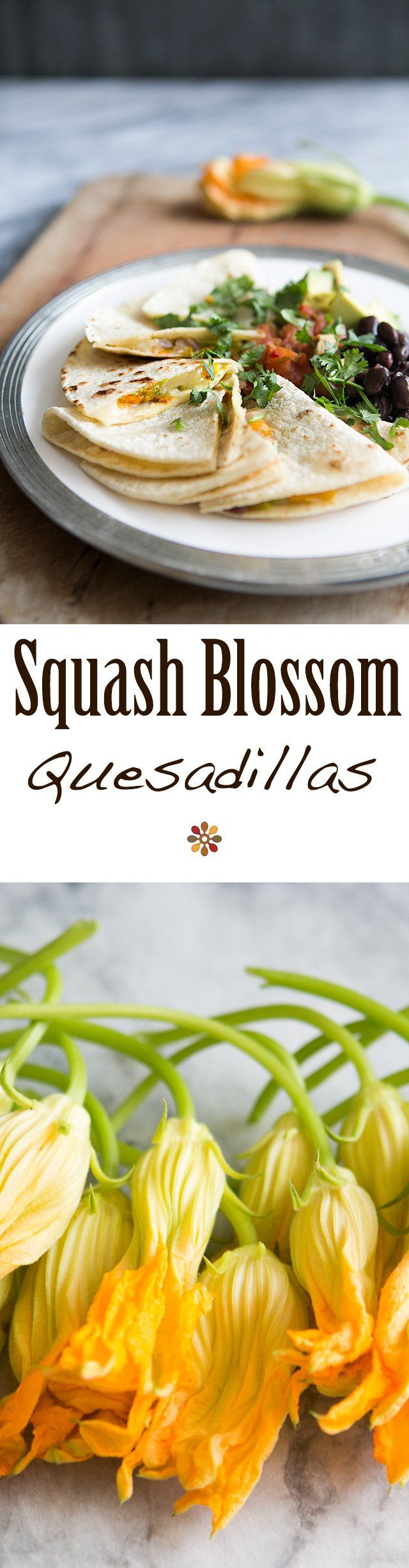 Squash on Pinterest | Summer Squash, Pattypan Squash and Squashes