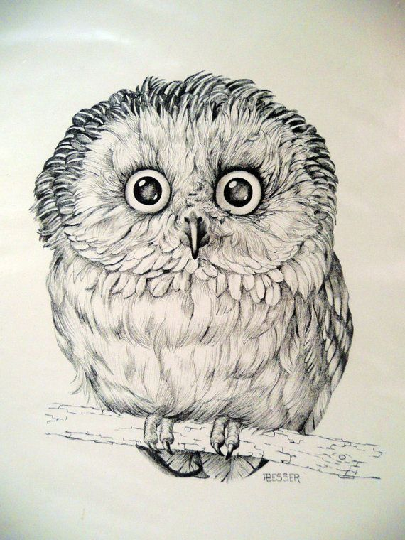 OWL - art PRINT - DRAWING by Besser - printed for Cunningham Art Products - 1971 Stapco - black and white. $14.00, via Etsy.