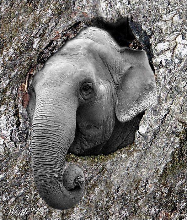 How to hide an elephant . . .