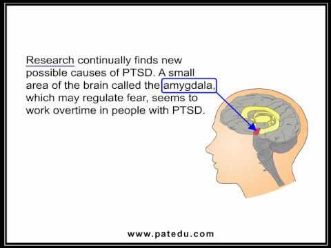 There doesn't seem to be any studies available that describe when someone who already has Complex PTSD due to events that occurred in their own life and is then followed by a similar trauma that occurs later in life to someone they love, such as a rape of their child. It would benefit the medical community to know how to respond as I can say personally that experiencing re-traumatization is incredibly intense and isolating.