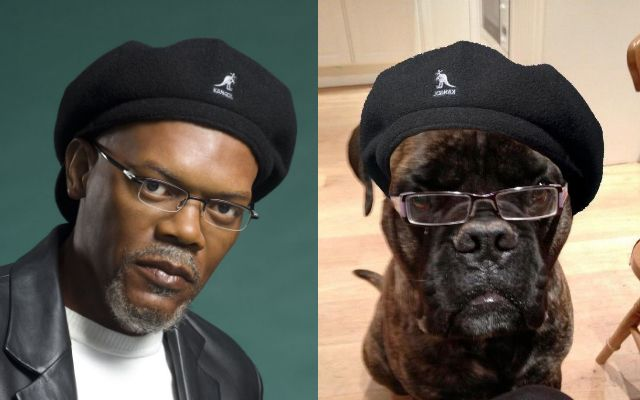"Ted Disbanded (has left the building): ""This dog looks exactly like Samuel L. Jackson"""