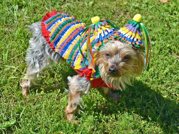 Easy do it yourself dog halloween costumes cartoonview costumes you can easily make yourself 91 best pet projects images on dog es animaux and solutioingenieria Images