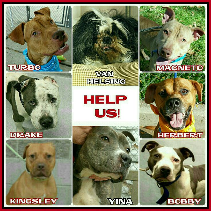 THE KILL LIST FOR MONDAY 11-7-16 8 BEAUTIFUL DOGS ARE IN DANGER PLEASE SHARE NOW TO SAVE A LIFE TOMARROW ALL AVAILABLE @NYCDOGS.URGENTPODR.ORG