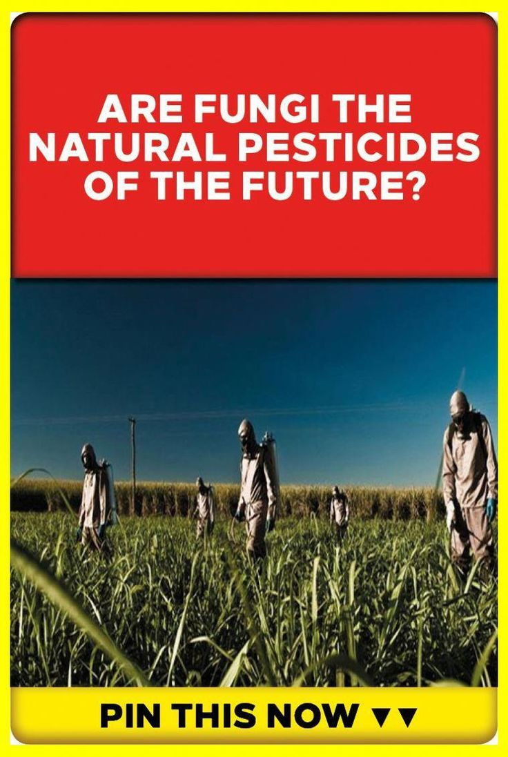 Excellent Tips To Help You Control Those Unwanted Pests In 2020 Natural Pesticides Organic Gardening Pest Control Pest Control