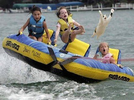 Who takes a cat water tubing? I cannot stop laughing!