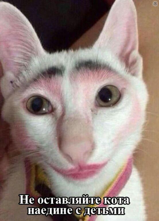 ツ Хорошее настроение ツ — Без кота жизнь не та.. .. | OK.RU