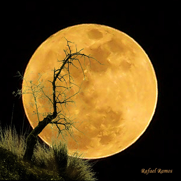 Harvest moon, beautiful