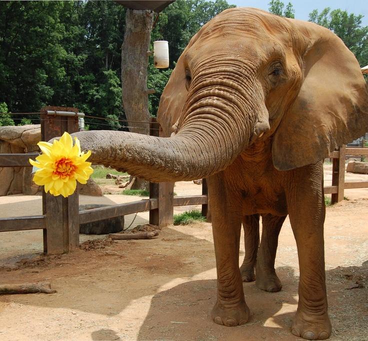 добрые слоны картинка что