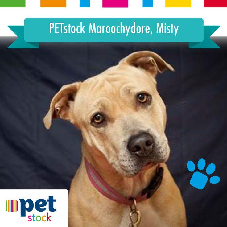 Misty the PETstock Maroochydore winner