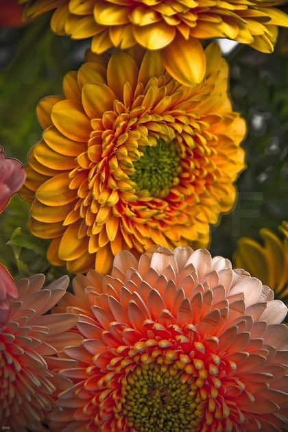 1000 images about perennial color on pinterest for Flowers that represent love