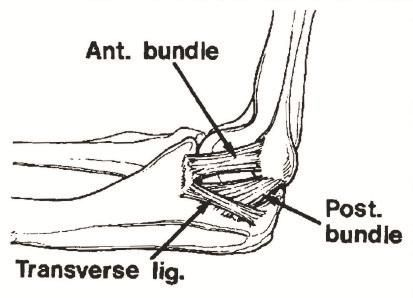 Medial & Lateral Collateral Ligament Injury Surgery Elbow