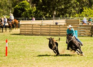 Campdrafting, photo by Abigail Boatwright. This article is great.
