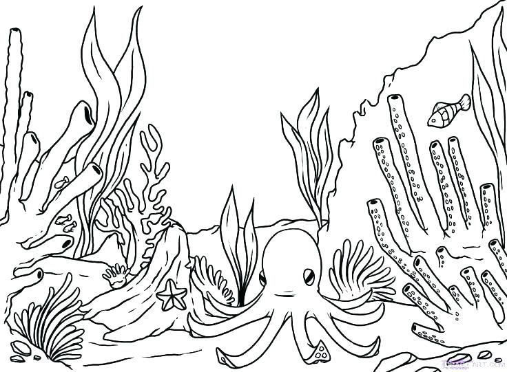 Free Printable Ocean Coloring Pages For Kids Ocean Coloring Pages Coral Reef Drawing Coral Drawing