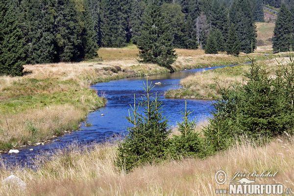 Roklanský potok (Sum)