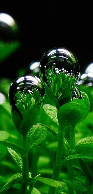 """Figurative Use. DEW is Scripturally associated with blessing, fertility, abundance. (Ge 27:28; De 33:13, 28; Zec 8:12) A return to Jehovah would result in blessing, God saying: """"I shall become like The DEW to Israel."""" (Ho 14:1, 5) JW.org also has the Bible bible based study aids to read, watch, listen download in 300+ (sign included) languages."""