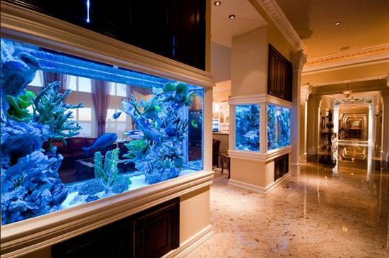 Million Dollar Rooms Aquarium | Reckless Bliss: Humble Chateau For The Most Basic Needs…
