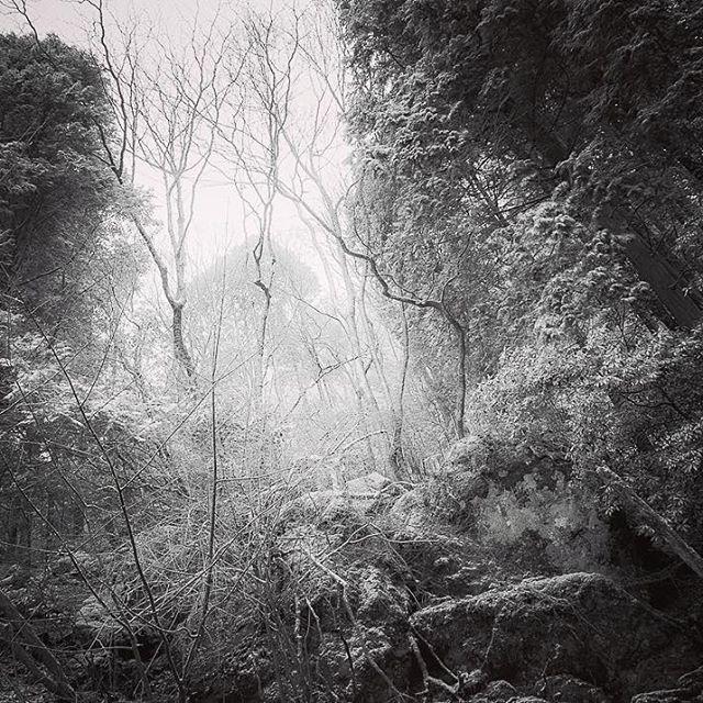 【yoshinobu_takaki】さんのInstagramをピンしています。 《冬の息 breath of winter. #photooftheday#photographer#photography#photo#monochrome#forest#tree#snow#silence#winter#landscape#igers#igersjp#team_jp_#fukuoka#japan#2017#写真好きな人と繋がりたい#写真撮ってる人と繋がりたい#写真#冬#静#雪#木#森#福岡#スナップ#風景#モノクローム#白黒》