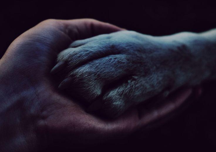 Man's best friend #dog #hand - Laura Andresen