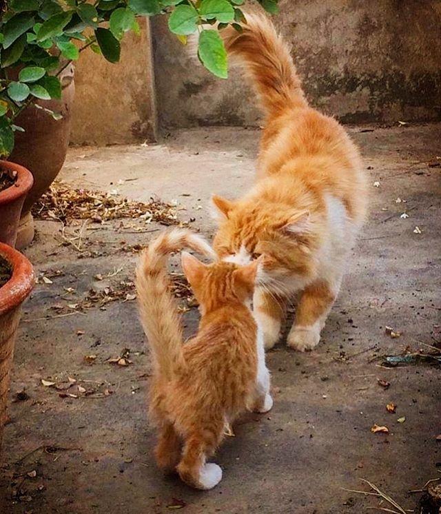 Maternity Chats Cats Katzen Gatos Gattos Cute Animals Pretty Cats Cute Cats