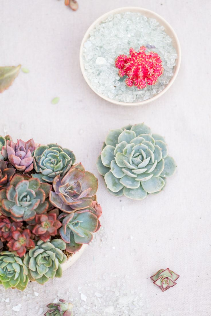 19 best Succulent Plants for Wedding Favors images on Pinterest ...