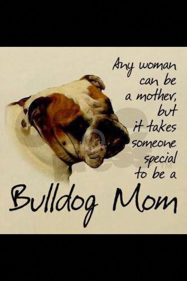 Bulldog Calm Courageous And Friendly Bulldog Mom Bulldog
