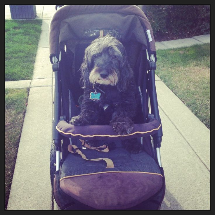 How to Convert a Children's Stroller to a pet stroller for toting your dog around